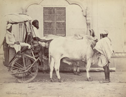 Indian carriage & pair